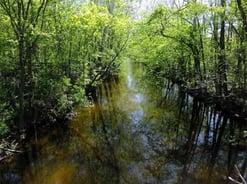 Coldwater River, Freeport MI
